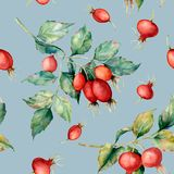 Watercolor seamless pattern with branch of Dog rose, red berries and green leaves. Hand painted briar and hips isolated. On blue background. Illustration for Royalty Free Stock Photography