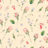 Watercolor seamless pattern with buds of rose Royalty Free Stock Image