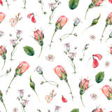 Watercolor seamless pattern with buds of rose Stock Photos