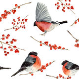 Watercolor seamless pattern with bullfinch and red berries. Hand painted ornament with birds and winter berries on white backgroun royalty free illustration