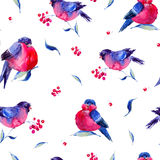 Watercolor seamless pattern with bullfinches. Winter vintage watercolor seamless pattern with bullfinches. Holiday Christmas design elements on white background Royalty Free Illustration