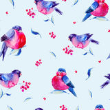Watercolor seamless pattern with bullfinches. Winter vintage watercolor illustration with bullfinches. Holiday Christmas design elements on blue background Vector Illustration