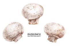Watercolor seamless pattern with champignons Royalty Free Stock Photos