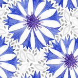 Watercolor seamless pattern with cornflower. Vector background. Royalty Free Stock Photo