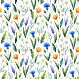 Watercolor seamless pattern with cornflowers, chamomile. Floral background. Hand drawn wildflowers royalty free stock image