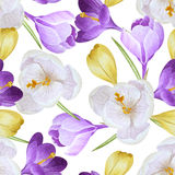 Watercolor seamless pattern with crocuses Stock Photography