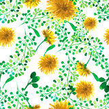 Watercolor seamless pattern with dandelion. Floral background. Royalty Free Stock Photo
