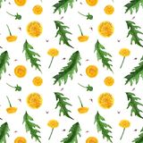 Watercolor seamless pattern of dandelion flowers and leaves. Dandelion seamless pattern. Watercolor on a white background, path included royalty free stock photo