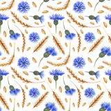 Watercolor seamless pattern with ears of wheat and cornflowers. royalty free illustration