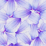 Watercolor Seamless pattern with flower petal Stock Photos