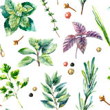 Watercolor seamless pattern of fresh herbs  . Stock Image