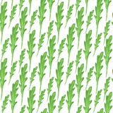 Watercolor seamless pattern with green leaves of arugula on white background. Hand paint vector illustration. Royalty Free Stock Photos