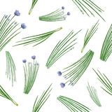 Watercolor seamless pattern hand drawn herb chives. Watercolor vector seamless pattern hand drawn herb chives. Watercolor leaves and branches of chives on a Stock Image