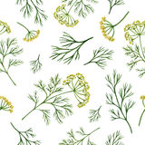 Watercolor seamless pattern hand drawn herb dill . Watercolor vector seamless pattern hand drawn herb dill . Watercolor leaves and branches of dill on a white Royalty Free Stock Photography