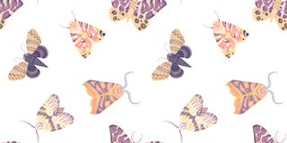Watercolor seamless pattern with illustration of exotic butterflies, moths isolated on white background. Perfect for you
