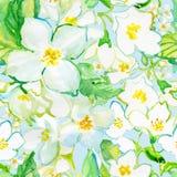 Watercolor Seamless pattern. Jusmine flowers Stock Photos