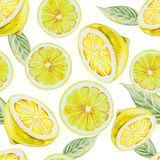 Watercolor seamless pattern of lemon fruit. Vector illustration of citrus fruits. Eco food illustration vector illustration