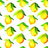 Watercolor seamless pattern with lemons. Hand painted citrus ornament on white background for design, fabric or print stock image