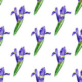 Watercolor seamless pattern with lilac iris. Painted Vector background. Vector background texture for fabric, gift paper, textile Royalty Free Stock Photo