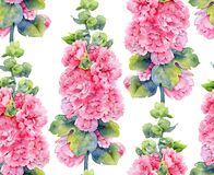 Watercolor seamless pattern with lush pink mallow flowers
