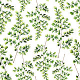Watercolor seamless pattern with maidenhair fern leaves. Hand painted fern ornament. Floral illustration isolated on. White background. For design, textile and vector illustration