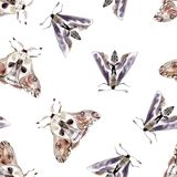 Watercolor seamless pattern with moths. Dark mystical colors. Lilac and brown vector illustration