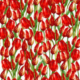 WATERCOLOR SEAMLESS PATTERN WITH PAINTED RED TULIPS. Watercolor illustration seamless pattern of beautiful red tulip buds flowers vector illustration