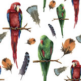 Watercolor seamless pattern with parrots and feathers. Hand painted red-and-green macaw and red-winged isolated on white Stock Image