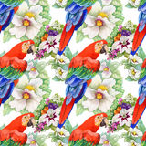 Watercolor seamless pattern with parrots and white flowers on white background. Watercolor seamless pattern with parrots and white flowers on white background Royalty Free Illustration