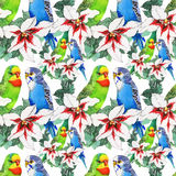 Watercolor seamless pattern with parrots and white flowers on white background. Royalty Free Stock Images