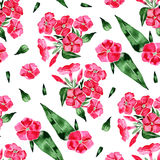 Watercolor seamless pattern with phlox flower. Hand drawn vintage illustration. Illustration Royalty Free Stock Images