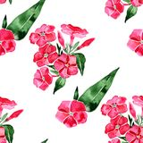 Watercolor seamless pattern with phlox flower. Hand drawn vintage illustration. Illustration Stock Photography