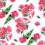 Watercolor seamless pattern with phlox flower. Hand drawn vintage illustration. Illustration Royalty Free Stock Photos