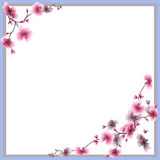Watercolor seamless pattern pink flowers of plum on a white background stock photo