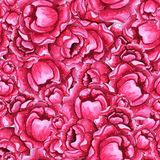 Watercolor Seamless pattern with pink peony flowers stock photography