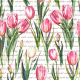Watercolor seamless pattern with pink and white tulip flowers. Hand-drawn watercolor seamless pattern with pink and white tulip flowers and the text on the Stock Illustration