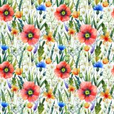 Watercolor seamless pattern with poppies. Floral background. Hand drawn summer flowers stock image