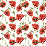 Watercolor seamless pattern with poppies. Hand painted floral illustration with flowers, leaves, seed capsule and. Branches isolated on white background. For Stock Image