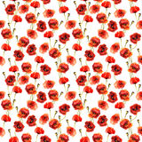 Watercolor seamless pattern with poppies Royalty Free Stock Image