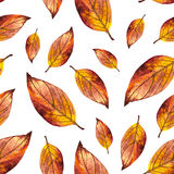 Watercolor seamless pattern of red autumn leaves. Watercolor seamless pattern red autumn leaves, hand painted orange watercolour autumn background of falling Stock Photos