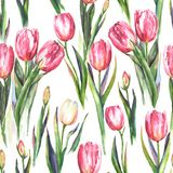 Watercolor seamless pattern with red and white tulip flowers. Hand-drawn watercolor seamless pattern with pink and white tulip flowers. Repeated spring print for Stock Illustration