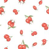 Watercolor seamless pattern of rosehip berries. Isolated on white, print for fabric, watercolor picture royalty free stock images