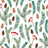 Watercolor seamless pattern of spruce branch, cone and berry Stock Photos