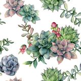 Watercolor seamless pattern with succulent bouquet and red berries. Hand painted flowers, branch and hypericum isolated. On white background. Floral royalty free illustration