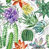 Watercolor seamless pattern with succulents and cactuses. Stock Photography