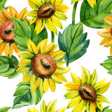 Watercolor seamless pattern with sunflowers Stock Photos