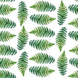 Watercolor seamless pattern with tropical ferns. White background Stock Photos