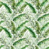 Watercolor seamless pattern with tropical tree leaves. Hand painted banana and coconut greenery exotic branch on white. Background. Botanical illustration for royalty free illustration