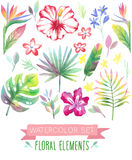 Watercolor tropicall set. Vector illustration Stock Image