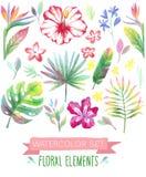 Watercolor tropicall set. Vector illustration stock illustration